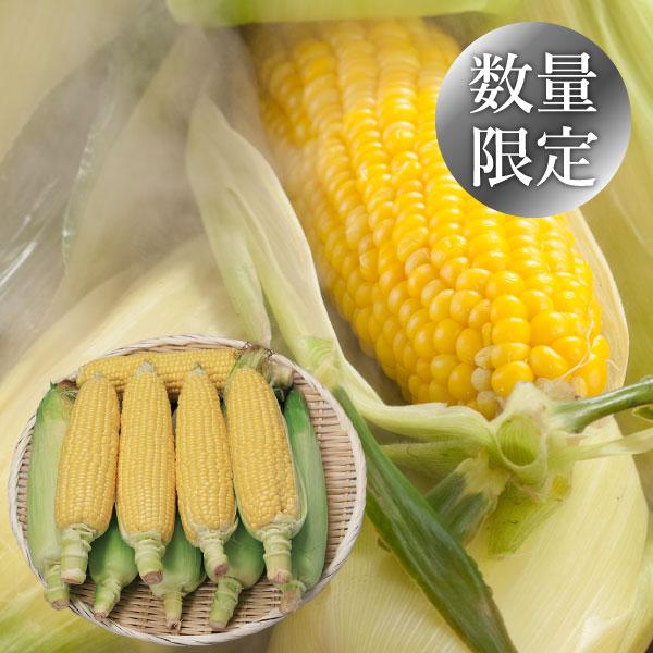 芽室産 なまら十勝野 ゴールドラッシュ 10本【送料無料】【ギフトセット】【詰め合わせ】【北海道】【とうもろこし】