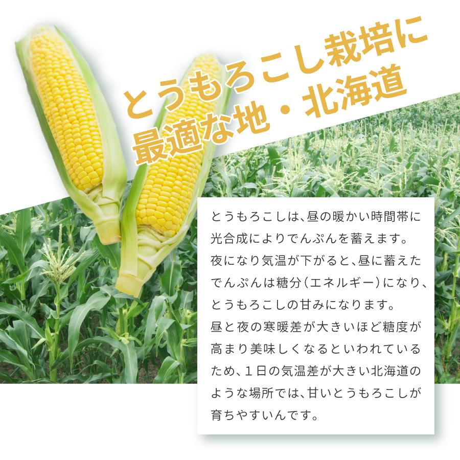 北海道は昼夜の寒暖差が大きいため、甘いとうもろこし(とうきび、コーン)が育ちやすいです。