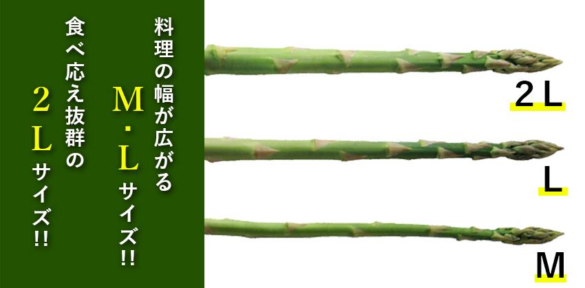 北海道グリーンアスパラ L/M混 800g